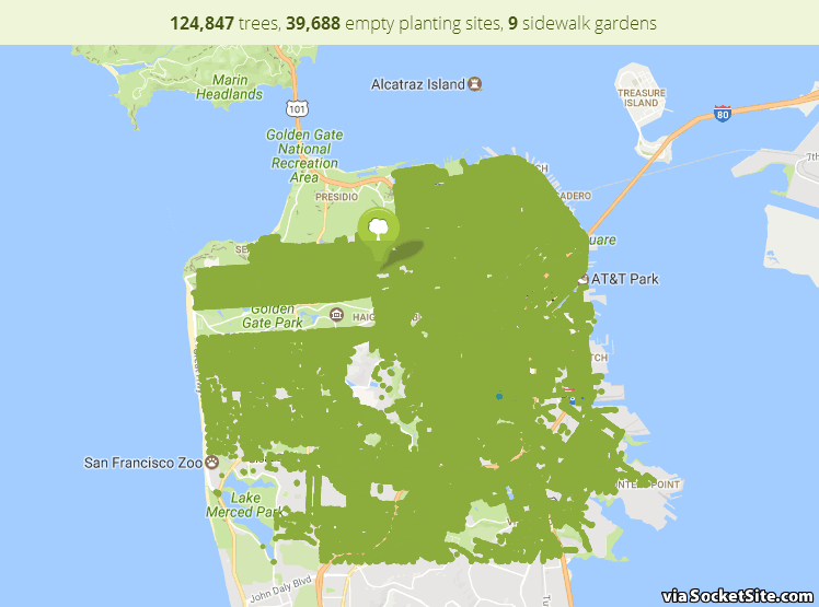 San Francisco Has 124,847 Street Trees and a Webpage for Each